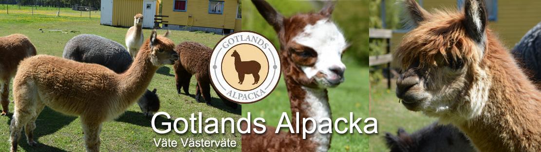Gotlands Alpacka