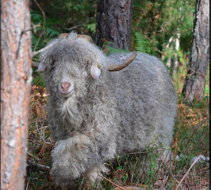 Våra djur angoraget i skogen